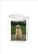 Ceramic Money Box Labrador Puppy