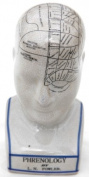 Large 23cm tall Phrenology Head