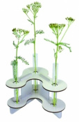 Flower vase with 3 glass cylinders white - Werkhaus