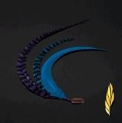 Condition Culture Statement Clips Featherlocks Seahorse