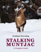 Stalking Muntjac