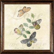 Pro Tour Memorabilia Butterflies Framed Artwork