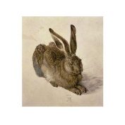 Young Hare, c.1502 Poster Print by Albrecht Durer