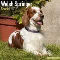 Welsh Springer Spaniel 2015