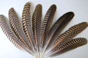 1 Pc Peacock Quill Natural Feathers