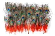 25 Pcs Peacock MINI Tail Feathers 5.1cm - 23cm Dyed ORANGE