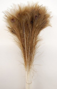 50 Pcs Peacock Feathers 60cm - 80cm Dark Bleached