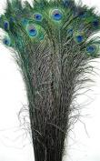 50 Pcs Dyed Peacock Feathers 100cm - 110cm BLACK