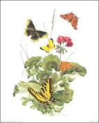 Butterfly II Paper Tole 3D Kit Size 8x10