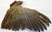 Pheasant Wing