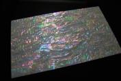 Prism Abalone Wide Shell Coated Veneer Sheet