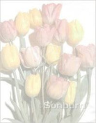 Geographics Geopaper letterhead pack of 25 tulips