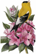 Washington State Bird and Flower Counted Cross Stitch Pattern