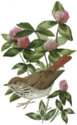 Vermont State Bird and Flower Counted Cross Stitch Pattern