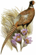 South Dakota State Bird and Flower Counted Cross Stitch Pattern