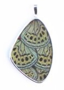 Callithea Philotima Green and Black Butterfly Wing XXL Pendant