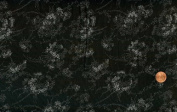 RJR 'Bare Essentials (XIV)' Delicate White Floral Toile Black Cotton Fabric By the Yard