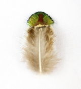 10 Golden Green Peacock Plumage Feathers 5.1cm - 13cm