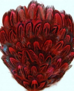 6 Pcs Dyed Pheasant Pads - RED Feathers