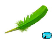Feathers, Turkey Feathers - Lime Green Turkey Rounds Quill Feathers - 6 Pieces