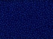 Seed Beads 13/0 Czech Opaque (a full one hank pack) over 60 colours available individually!, Dark Blue