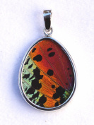 Sunset Moth Butterfly Wing Medium Pear-Shaped Pendant