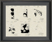 Luther Burbank Botanist Patent Art Collection 20x24 | Gardener Farmer Print Gift
