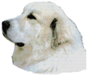 Great Pyrenees Dog Portrait Counted Cross Stitch Pattern