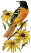 Maryland State Bird and Flower Baltimore Oriole and Black-eyed Susan Counted Cross Stitch Pattern