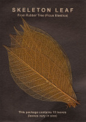 SEPIA RUBBER TREE LEAVES - Pack of 10 skeleton leaves