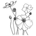 Penny Black Wood Mounted Rubber Stamp 5.7cm x 7cm : Poppies