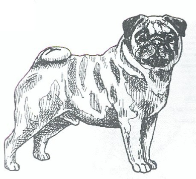 Dog Rubber Stamp - Pug-2E (Size: 5.1cm Wide X 2.5cm - 1.9cm Tall)