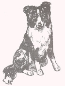 Dog Rubber Stamp - Border Collie-2E (Size