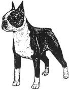 Dog Rubber Stamp - Boston Terrier-1E (Size