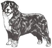 Dog Rubber Stamp - Bernese Mountain Dog-1F (Size