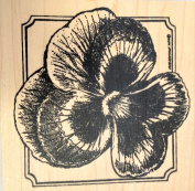 Pansy Blossom With Notched Square Border Rubber Stamp Wood Mounted by Northwoods Rubber Stamps, Inc. PP9458