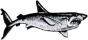 Shark - Furious Ferocious Great White Swimming - Embroidered Iron On Or Sew On Patch