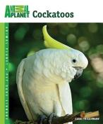 Cockatoos (Animal Planet
