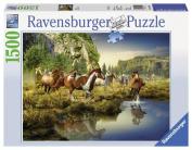Puzzle-Wild Horses