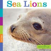 Seedlings Sea Lions