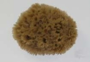 HYDRA 00509 Number-556 14cm X 15cm 156 Key Wool Natural Sponge
