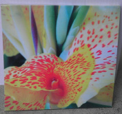 Orchid Flower Canvas Picture for Wall - 28cm x 28cm