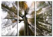 Picture Sensations Framed Huge 3-Panel Sun Tree Rays of Light Giclee Canvas Art