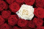 Studio B Bed of Roses Poster