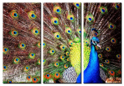 Picture Sensations Framed Huge 3-Panel Bird Peacock Giclee Canvas Art