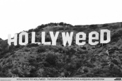 Studio B Hollyweed Poster Poster