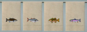 Fish Embroidered Guest Hand Towel 36cm X 60cm Set of 4 Designs