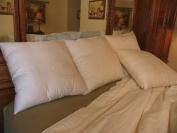 Bio Sleep Concept Organic Wool Lite Pillow