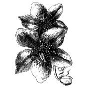 LaBlanche Silicone Stamp 6.4cm x 11cm -Delicate Flowers