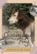 Chincoteague Pony Identification Cards